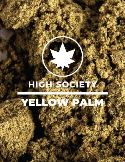 POLLEN YELLOW PALM CBD