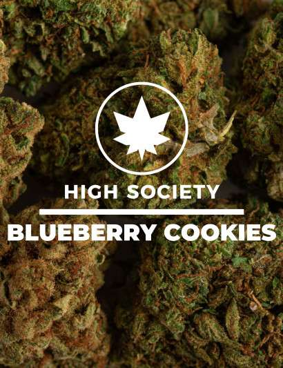 BLUEBERRY COOKIES CBD