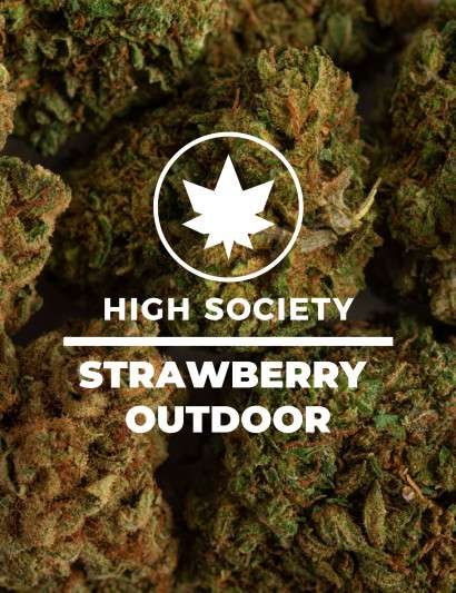 STRAWBERRY OUTDOOR CBD