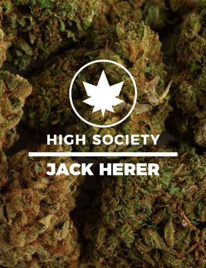 JACK HERER CBD