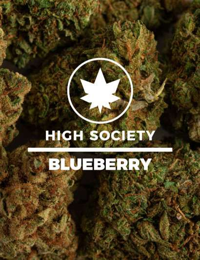 BLUEBERRY CBD