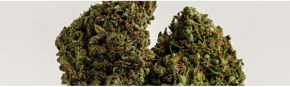 Vente Fleur de CBD en France - Chanvre légal | High Society