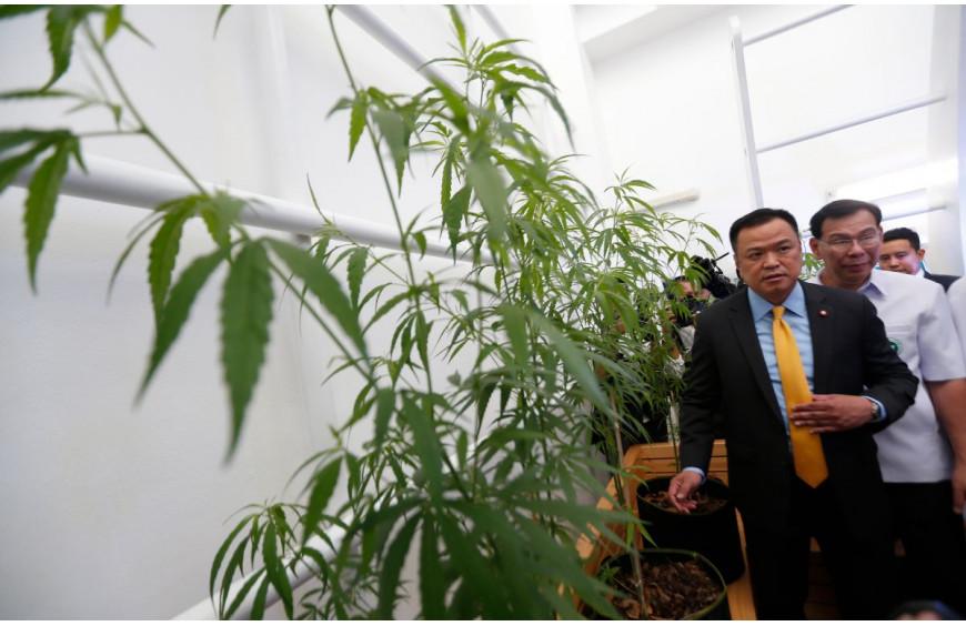 Les patients et agriculteurs thailandais peuvent cultiver et commercialiser leur cannabis médical