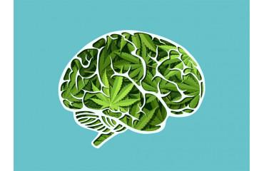 Le CBD augmente le flux sanguin du cerveau pour la mémoire et la décision