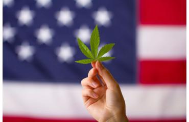 USA : le taux de THC du chanvre relevé à 1% au Minnesota