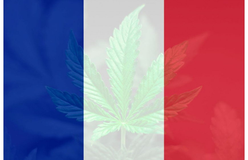 Du cannabis médical produit en France