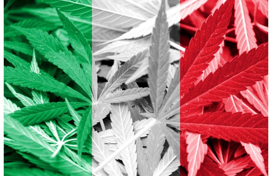 Italie : les fleurs de CBD ont fait baisser les ventes de sédatifs et d'antidépresseurs